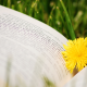 spring library lesson plans and activities
